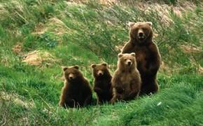 Cuccioli Orso Abruzzo Parco Nazionale